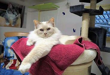 Kat in de auto: zo blijft het relaxed