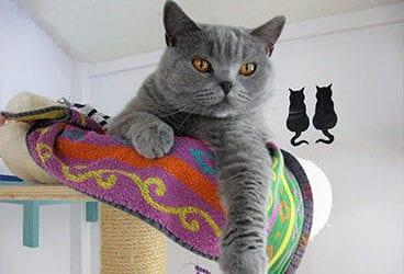 Vakantie: kat thuislaten of naar het pension?