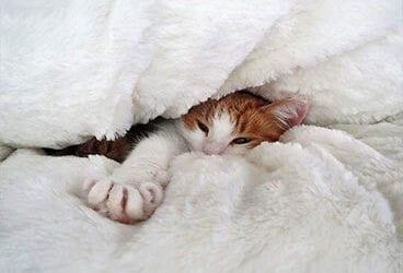 Hoe weet je of je kat het leuk vindt in pension?