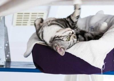 Kattenpension-Silvestris-Els-Driesprong-Kat-tevreden-speels2