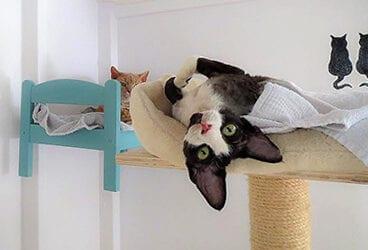 Wat zou jij doen met je kat?