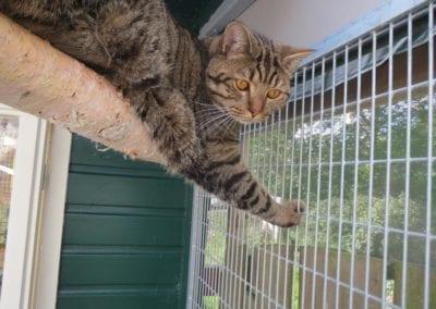 Kattenpension-Silvestris-Els-Driesprong-arie-7-_