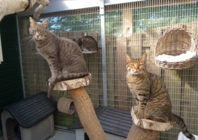Kattenpension-Silvestris-Els-Driesprong-arie-_-mojo-1-_