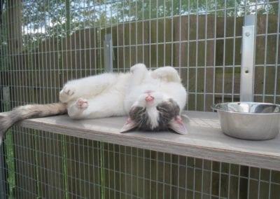Kattenpension-Silvestris-Els-Driesprong-binky-10-_