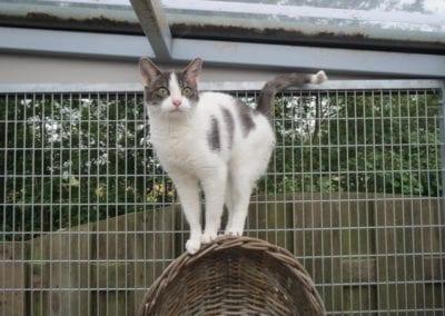 Kattenpension-Silvestris-Els-Driesprong-binky-3-_