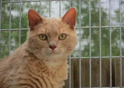 Kattenpension-Silvestris-Els-Driesprong-brom-1-_