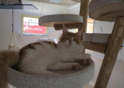 Kattenpension-Silvestris-Els-Driesprong-cyrano-8-_Copy_