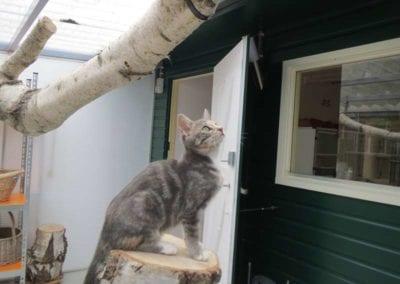 Kattenpension-Silvestris-Els-Driesprong-dribbel-2-_