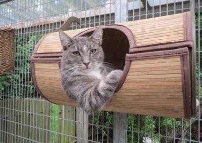 Kattenpension-Silvestris-Els-Driesprong-emma-3-_