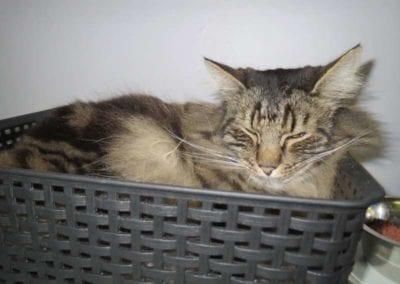Kattenpension-Silvestris-Els-Driesprong-eros-2-_