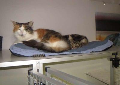 Kattenpension-Silvestris-Els-Driesprong-eros-_-milly-1-_