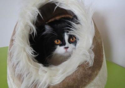Kattenpension-Silvestris-Els-Driesprong-feline-3-_