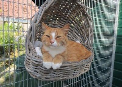 Kattenpension-Silvestris-Els-Driesprong-finn-4-_