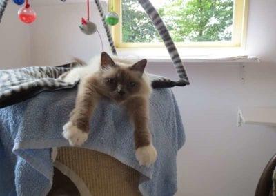 Kattenpension-Silvestris-Els-Driesprong-fleur-j-4-_