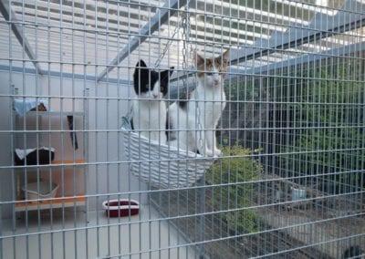 Kattenpension-Silvestris-Els-Driesprong-fluf-_-rakker-10-_