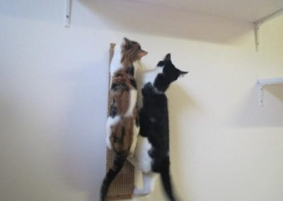 Kattenpension-Silvestris-Els-Driesprong-fluf-_-rakker-5_800x600