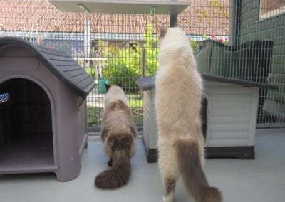 Kattenpension-Silvestris-Els-Driesprong-fonzie-_-valentijn-4-_