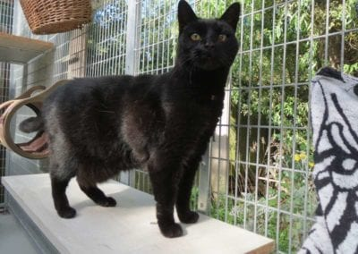 Kattenpension-Silvestris-Els-Driesprong-hitan-5-_
