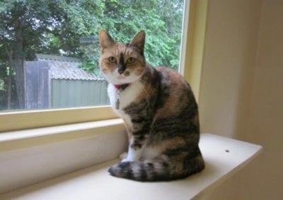 Kattenpension-Silvestris-Els-Driesprong-houdini-1_800x600