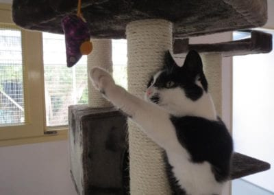 Kattenpension-Silvestris-Els-Driesprong-ienie-minie-12-_