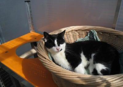 Kattenpension-Silvestris-Els-Driesprong-ienie-minie-18-_