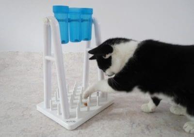 Kattenpension-Silvestris-Els-Driesprong-ienie-minie-23-_