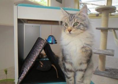 Kattenpension-Silvestris-Els-Driesprong-jagger-1-_