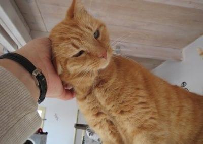 Kattenpension-Silvestris-Els-Driesprong-jans-4-_