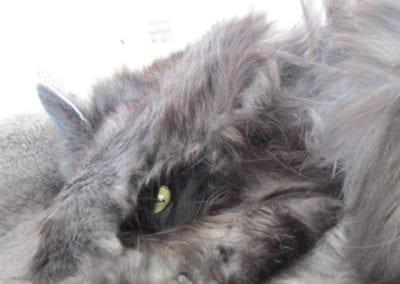 Kattenpension-Silvestris-Els-Driesprong-jessy-de-reuver-11_800x600