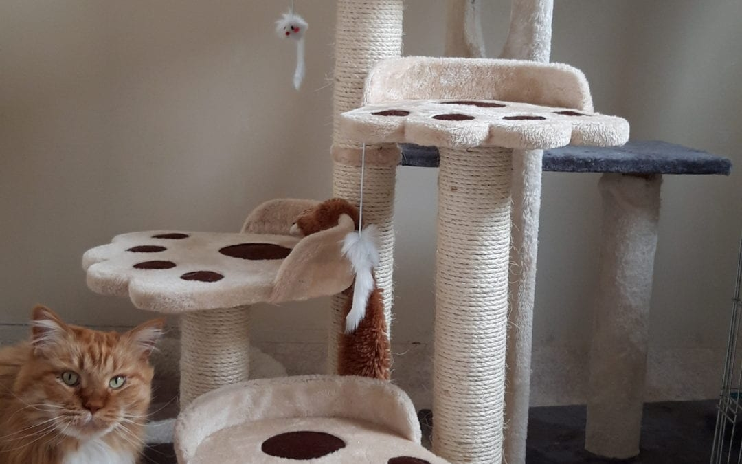 Maatwerk in het kattenpension, wat is dat?