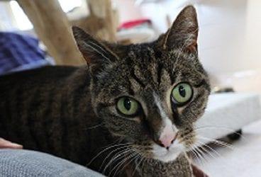 Gastblog van Fieke Halberstadt, Kat&Mens, gedragsbegeleiding voor de kat