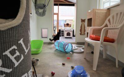 Alleen voor jou kat of kattengezin een eigen ruime kamer.
