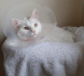 Extra zorg voor je kat