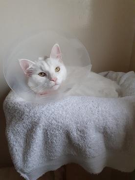 hope, extra zorg voor je kat